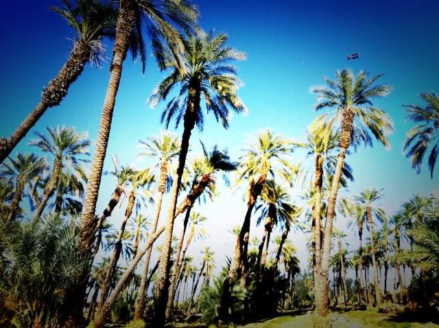 Coachella Day 3 #coachella2012